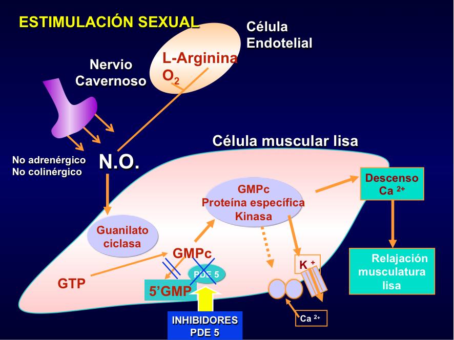 Estimulação sexual contra a impotência